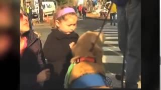 目光交流越久 人与狗的感情越深