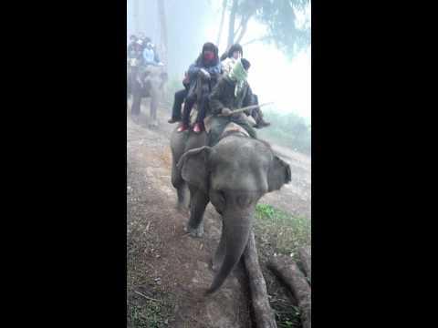 Chitwan-Elephant safari_02