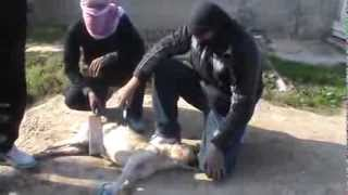 المدنيين المحاصرين في ريف دمشق الجنوبي يأكلون لحم الكلاب من الجوع 1   1   2014