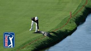 Cody Gribble's alligator encounter at Arnold Palmer Invitational