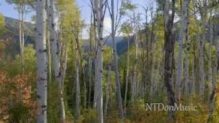 Relaxing piano music with beautiful nature scene