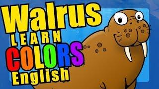 Colors Walrus Parade