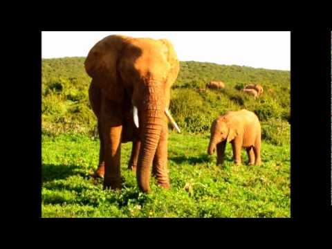 Addo Elephant National Park Safari – South Africa 2011