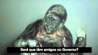 Koko e a sua mensagem de ano novo aos portugueses