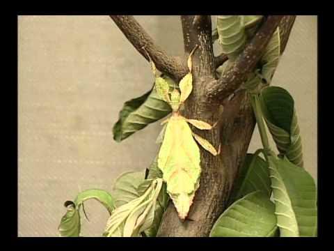 國小_自然_補充─昆蟲的飼養環境【翰林出版_四下_第二單元 昆蟲王國】 - YouTube