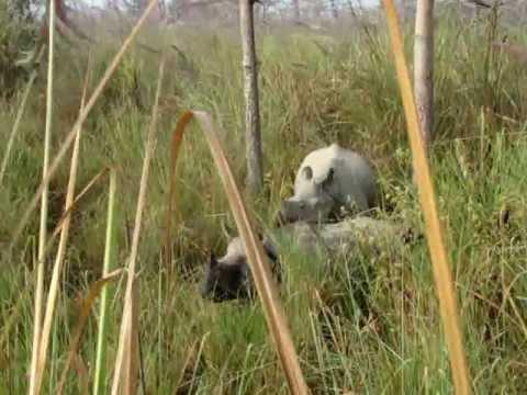 Мать и ребенок — носороги в природе