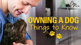 OWNING A DOG | Things to Know Before Getting a Puppy! | Doctor Mike width=