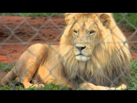 Bridgewater South Africa trip