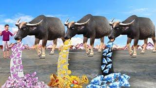 जादूई तीन भैंस Magical Jadui Teen Buffalo Comedy Video हिंदी कहानियां Hindi Kahaniya Comedy Video