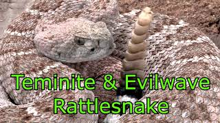 Rattlesnake (100% Clean) | Teminite & Evilwave