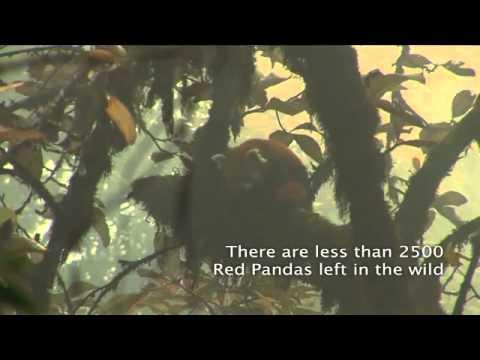 Red Panda Network (RPN) Public Service Announcement PSA-video, Nepal 2008