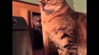 scherzi bastardi  gatti bastardi