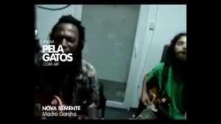 Nova Semente (Brasil) - Acustico en PelaGatos - Reggae