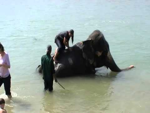 Elephant Bath Chitwan Nepal.