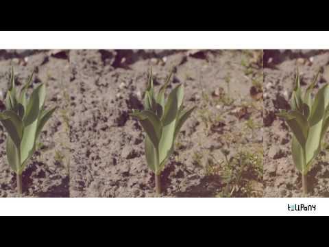 mikromusic-takiego-chlopaka-tulipany-remix-tulipany