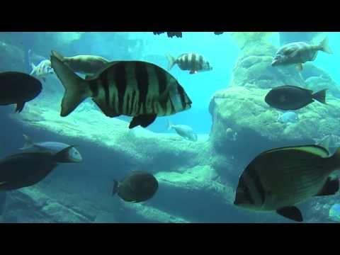 uShaka aquarium Durban visit – Oct 14, 2010: Line, Jonatan, Simon
