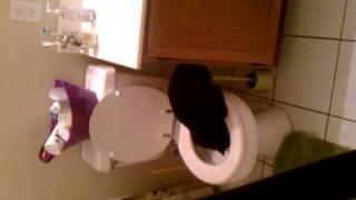 Timon and toilet