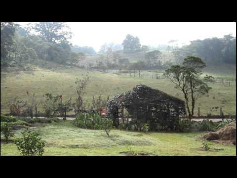 Finca Neblina del Bosque – Miraflor, Estelí Nicaragua