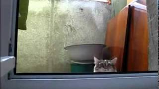 Suspense Kitty Cat
