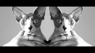 Kittens Of The Internet - Golden Lights (Official Video)