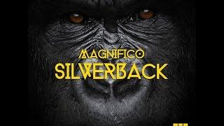 Silverback - Magnifico
