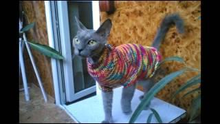 Шьем и вяжем одежду для кошек