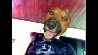 video caninos presenta nosa asim voce me mata