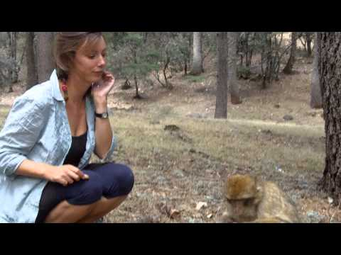 Sarah feeds Barbary Apes, mid-Atlas, Morocco