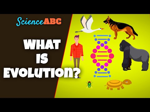 What is Evolution: A REALLY SIMPLE and Brief Explanation