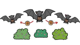 Why do Bats Transmit so many Diseases like Ebola