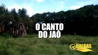 O CANTO DO JAÓ