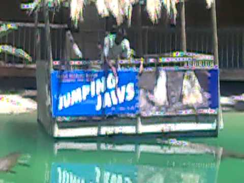 Crocodile Jump Attack will be fatal for a human