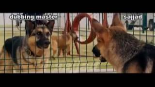 dog funny clip width=