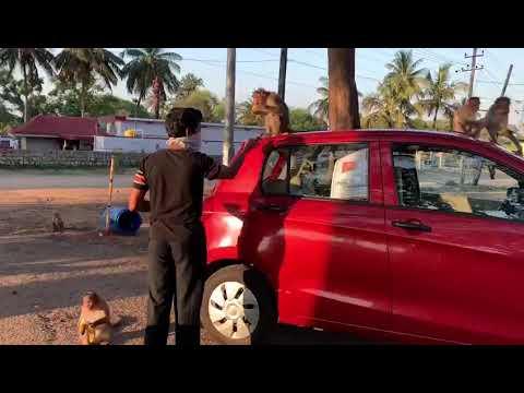 monkey feeding in Karnataka