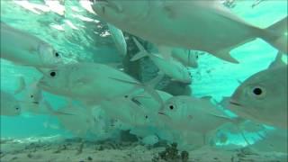 Maldivlerin Büyüleyici Sualtı Dünyası / Kamera: Ümit Satış