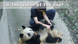 I'm The Queen Of The Day! | iPanda