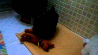 video 2011 07 21 03 09 41