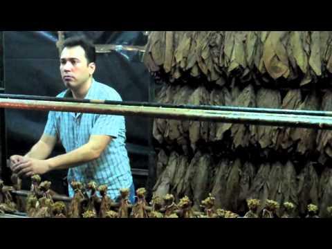 Tour: Joya de Nicaragua Factory (Part 1) – Wrapper and tobacco prep