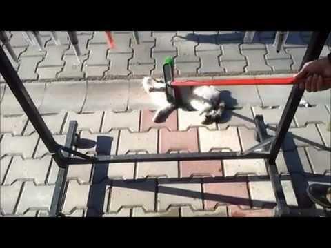 Kedimizin Sabah Keyfi