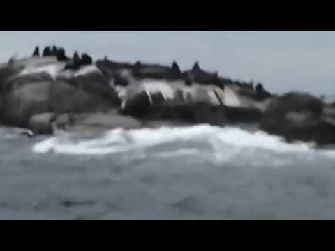 Isola delle foche Capo di buona Speranza