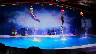 Best of the Dubai Dolphin Show 2019