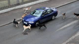 Geen verkeer in onze straat !