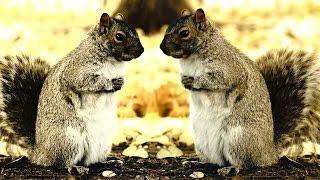 Squirrels climbing trees - Hide and seek (Tweak) - Conspiracy Nut [ Music Video (Élie Veilleux)]