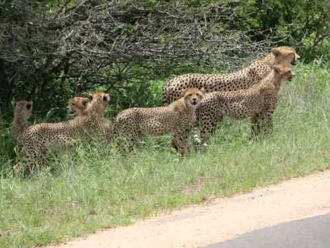 The Hee Family Visits S Africa Pt 1