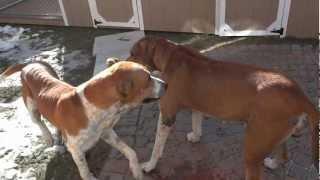 DOG WANTS A GIRLFRIEND width=