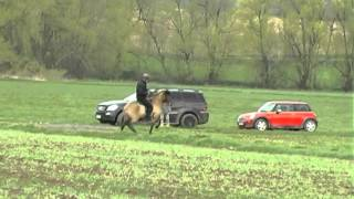 Hremming frá Skeidvöllum - Trainingsvideo