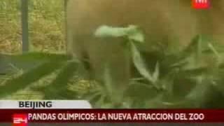 Pandas son mascotas de los Juegos Olímpicos