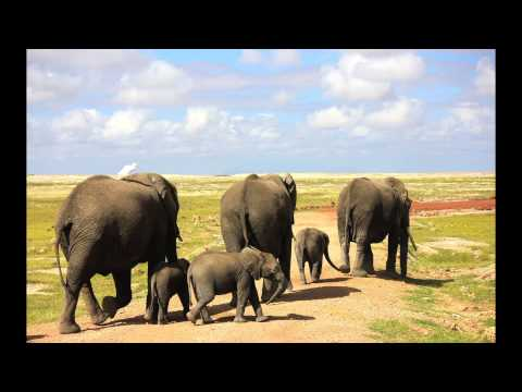 Kenya Wildlife Amboseli National Park