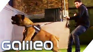 Die besten Wachhunde der Welt   Galileo   ProSieben