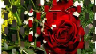 Los Challengers (Rosa Perfumada)
